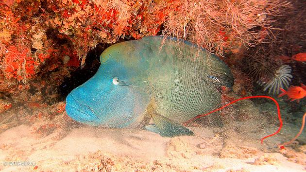 Venez découvrir les fonds marins de l'archipel des Maldives
