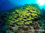 Programme de votre croisière plongée aux Maldives - voyages adékua