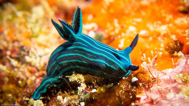 Découvrez les trésors des Galapagos pendant votre séjour plongée
