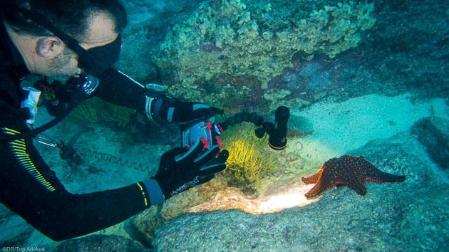 Un séjour plongée de rêve à la découverte des Galapagos
