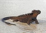 Quelques exemples de sites de plongée des Galapagos pour vous mettre l'eau à la bouche... - voyages adékua