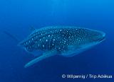 7 jours de croisière aux Galapagos, au cœur des origines - voyages adékua