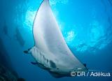 Vous croisez du gros sur cette croisière plongée en Indonésie - voyages adékua