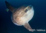 Croisière Komodo avec des plongées sur des sites classés par l'UNESCO - voyages adékua