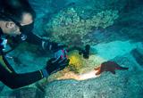 Des plongées bouteille variées sur des spots mythiques - voyages adékua