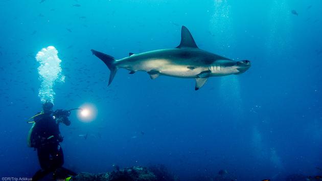 Découvrez les plus belles espèces des fonds marins des Galapagos