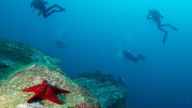 Plongée sous marine aux Galapagos en Equateur