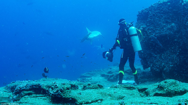 Des plongées inoubliables aux Galapagos