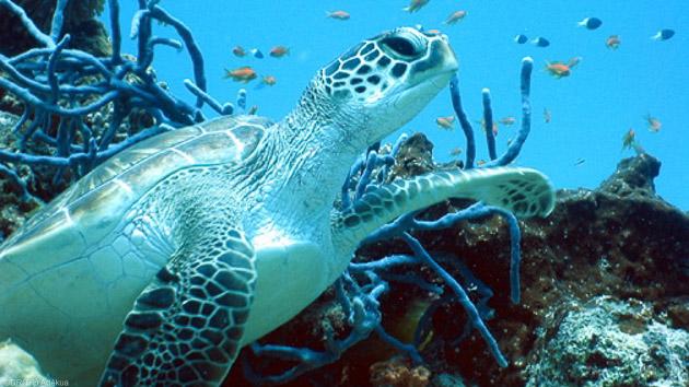Découvrez les plus belles espèces marines de l'archipel des Mozambique