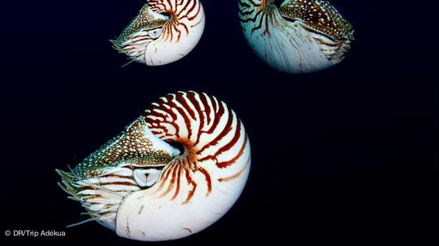 merveilles sous-marines pou rla plongée au Palau