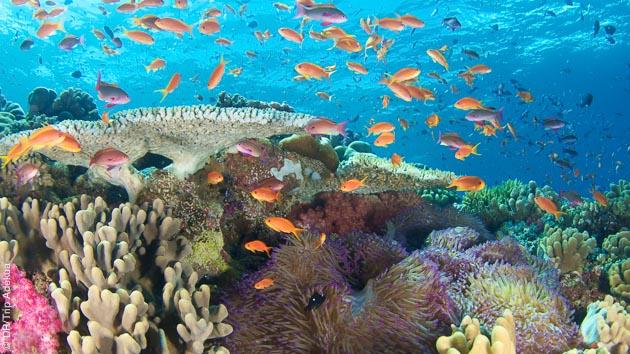 Un festival de couleurs et de poissons dans les eaux du Pacifique Sud, aux îles Fidji