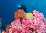 Quelques sites de plongée d'exception dans l'Océan Pacifique Sud - voyages adékua