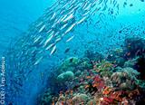 Raies mantas et requins marteaux au paradis des coraux mous - voyages adékua