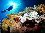 Richelieu Rock, Similan, Surin, les plus belles plongées de la Thaïlande! - voyages adékua
