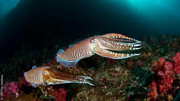 la beauté des fonds marins de Thailande