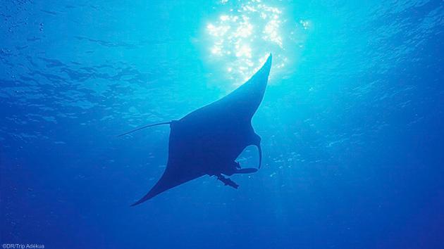 Plongez avec les plus belles espèces marines de mer Rouge en Egypte