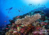 Croisière plongée Visayas, loin des sites surplongés des Philippines pour un grand vent de liberté ! - voyages adékua