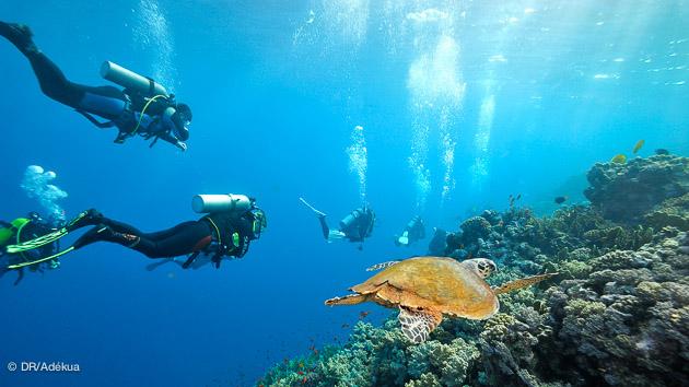 croisière club de plongée
