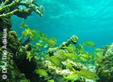 Votre baptême de plongée aux Bahamas - voyages adékua