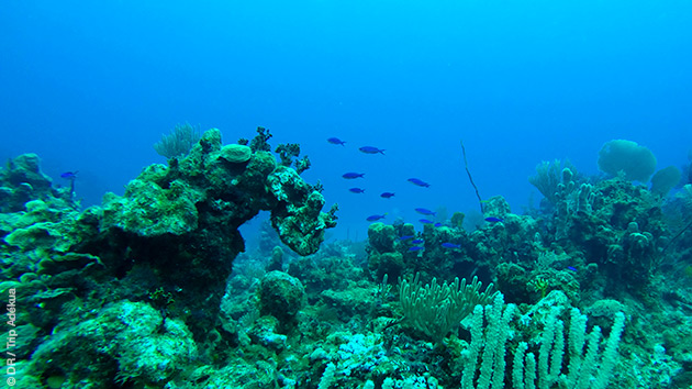 Initiation à la plongée sous marine, en famille, dans les eaux cristallines des Bahamas