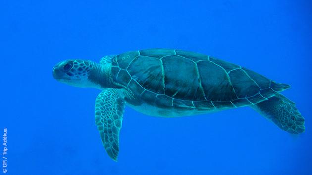 Des activités sur l'île de Cat Island pour compléter vos plongées découvertes : un super séjour en famille aux Bahamas