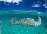 18 plongées sur les spots les plus fabuleux du Pacifique - voyages adékua