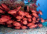Jours 9 à 13 : Des plongées fantastiques à Rangiroa et une immersion dans la vie locale - voyages adékua
