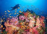 Raies mantas, requins marteaux et une richesse sous-marine exceptionnelle vous attend aux Fidji - voyages adékua