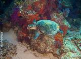 Gros et macro pour vos plongées aux îles Fidji - voyages adékua