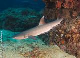 Vos plongées sur les joyaux de l'Océan Pacifique Sud - voyages adékua
