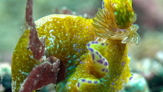 Muck diving en Indonésie, à la recherche de la faune macro de Lembeh