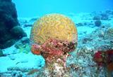 Bonaire, paradis de la plongée du bord - voyages adékua