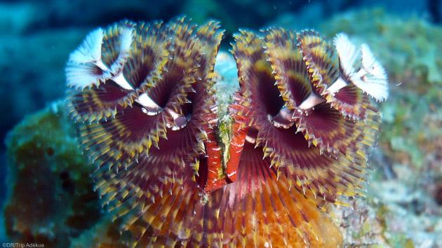 Votre séjour au paradis de la plongée, l'île de Bonaire aux Caraïbes