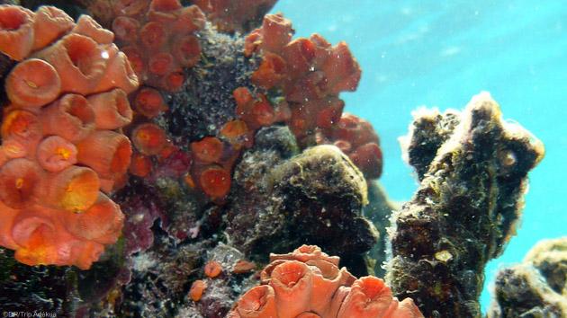 Votre séjour plongée à Bonaire : le paradis des plongeurs