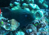 Les îles Gili-Lombok, paradis sous-marin de la plongée entre Lombok et Bali - voyages adékua