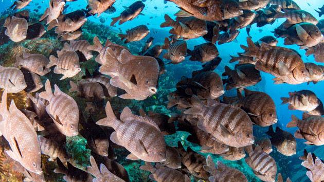 Découvrez la diversité des fonds marins de Saint Hélène