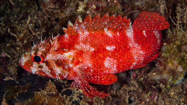 Nagez à la découverte des plus belles espèces de l'Atlantique Sud