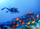 Jours 1 à 3 : premières expériences de plongées à Tahiti - voyages adékua