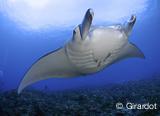 Jours 6 à 9 : Découverte de Tikehau et plongées de rêves - voyages adékua