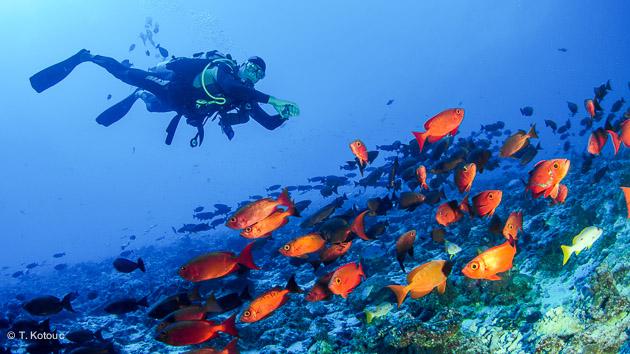 Plongez à la découverte des jardins de coraux de Tikehau