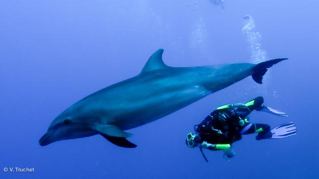 Plongez avec les requins et raies manta du Pacifique