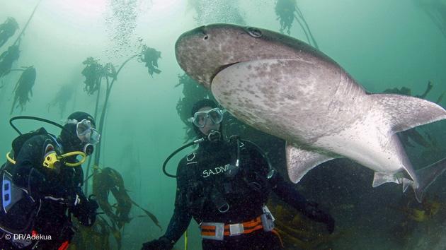 de nombreuses espèces de requins visibles sur ce séjour spécial requin en Afrique du Sud