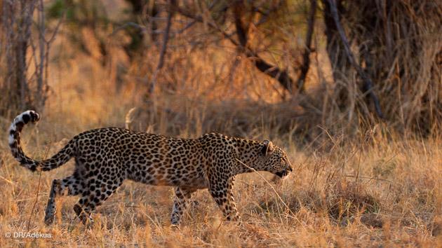 faune intacte en afrique du sud pour un big 5