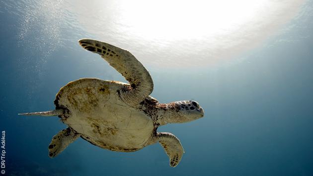 Faune exceptionnelle et nature préservée, découverte en plongée dans les réserves marines du Vietnam