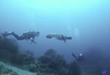 Découvrez les joies de la plongée dans le Pacifique - voyages adékua