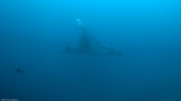 Découvrez les plus beaux spots de plongée d'Equateur