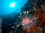 Vos plongées VIP à la rencontre des mantas et poissons lune de Nusa Penida - voyages adékua