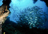 Un itinéraire unique pour découvrir les plus beaux sites de plongée à l'Est de Bali - voyages adékua