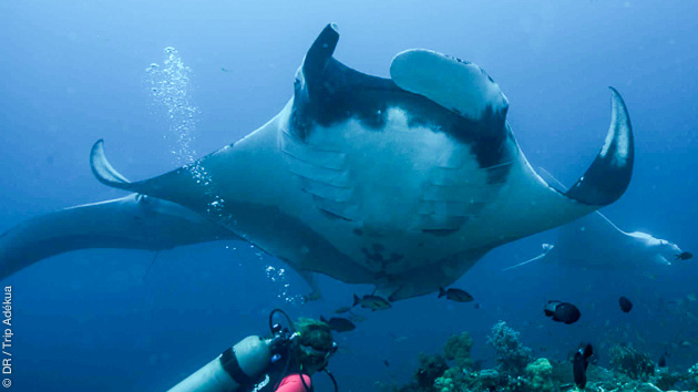 Séjour plongée d'exception à Nusa Penida près de Bali en Indonésie