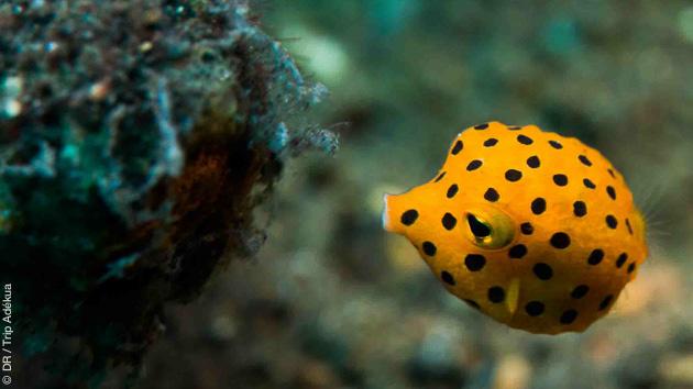 Rencontres exceptionnelles sur les fonds de Nusa Penida : mantas, poissons lune, coraux... pour le bonheur des plongeurs